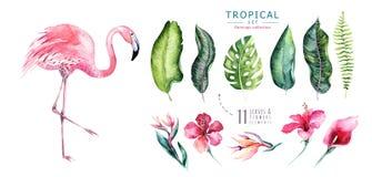 Los pájaros tropicales dibujados mano de la acuarela fijaron de flamenco Ejemplos color de rosa exóticos del pájaro, árbol de la  libre illustration