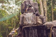 Los pájaros tropicales exóticos de la fauna y de la selva tropical en un pájaro parquean Imágenes de archivo libres de regalías