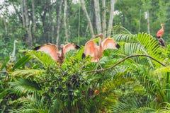 Los pájaros tropicales exóticos de la fauna y de la selva tropical en un pájaro parquean Imagen de archivo libre de regalías