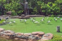 Los pájaros tropicales exóticos de la fauna y de la selva tropical en un pájaro parquean Imagen de archivo