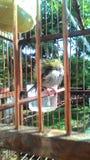 los pájaros verdes toman el sol en la jaula de bambú Fotografía de archivo libre de regalías