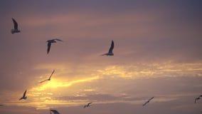 Los pájaros vuelan contra la puesta del sol hermosa, a cámara lenta
