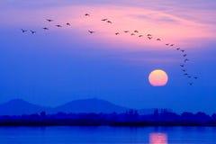 Los pájaros vuelan de nuevo a la jerarquía en la puesta del sol Foto de archivo libre de regalías