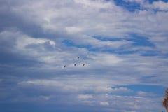 los pájaros vuelan en un cielo nublado azul Imágenes de archivo libres de regalías