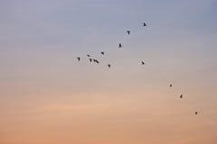 Los pájaros vuelan los cielos, hermosos Imágenes de archivo libres de regalías