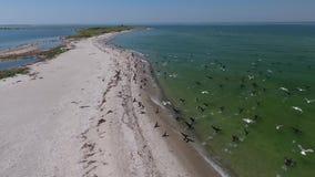 Los pájaros vuelan para arriba de la orilla almacen de metraje de vídeo