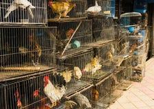 Los pájaros y las gallinas vendieron en jaulas en el mercado animal Depok admitido foto Indonesia Fotos de archivo