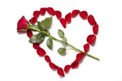 Los pétalos color de rosa rojos en corazón forman con subieron Fotos de archivo