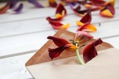 Los pétalos de flores se vierten del sobre en la tabla de madera Imagenes de archivo