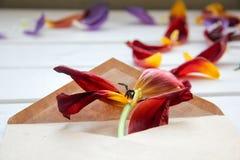 Los pétalos de flores se vierten del sobre en la tabla de madera Fotos de archivo libres de regalías
