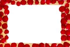 Los pétalos de Rose arreglaron en un marco blanco imagenes de archivo