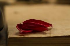 Los pétalos de una flor en viejo espacio en blanco abren el libro en fondo de madera Menú, receta Fotografía de archivo libre de regalías