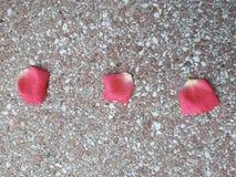 Los pétalos del rosa de Rose mienten en la tierra fotos de archivo