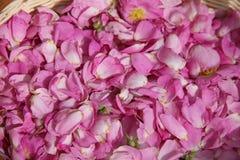 Los pétalos rosados de salvaje subieron Imagen de archivo libre de regalías