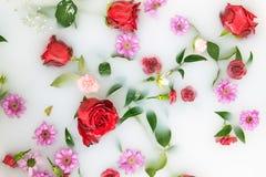 Los pétalos y las hojas de la flor de la mezcla en baño de la leche, fondo o textura para el masaje y el balneario, se relajan Imágenes de archivo libres de regalías