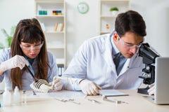 Los paleontólogos que miran los huesos de animales extintos imagenes de archivo