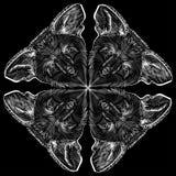 Los palos en una línea blanca en un fondo negro Fotografía de archivo libre de regalías
