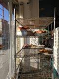 Los panaderos de la panadería atormentan imágenes de archivo libres de regalías