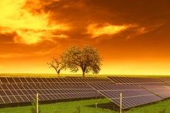 Los paneles de energía solar antes de árboles y del cielo de la puesta del sol Fotos de archivo