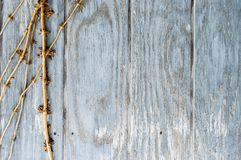 Los paneles de madera redondos traseros con las vides Foto de archivo