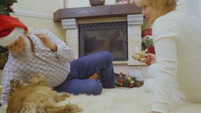 Los pares adultos juegan con su perro cerca del árbol de navidad metrajes