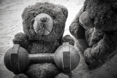 Los pares del oso de peluche ejercitan con pesas de gimnasia y la cinta Imagenes de archivo