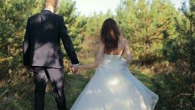 Los pares en el bosque novia y novio que caminan en el borde del bosque del pino en el día de boda metrajes
