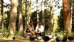 Los pares jovenes alimentan las palomas almacen de metraje de vídeo