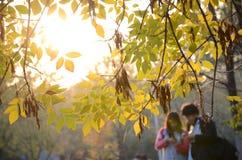 Los pares jovenes en la lectura en el bosque foto de archivo libre de regalías