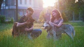 Los pares preciosos jovenes acarician su reconstrucción de los perros al aire libre en la puesta del sol