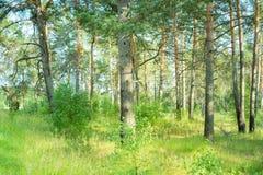 Los parques naturales de la región de Moscú, en la gente de maderas van a relajarse imágenes de archivo libres de regalías