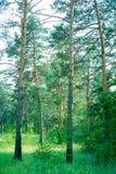 Los parques naturales de la región de Moscú, en la gente de maderas van a relajarse fotos de archivo libres de regalías