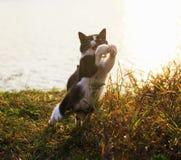 Los paseos de gato divertidos ágiles en el prado y cogen algo en th imagenes de archivo
