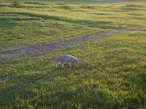 Los paseos de gato en la hierba imagen de archivo