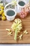 Los pasos de hacer decoraciones florales con la primavera temprana florecen: hy Foto de archivo libre de regalías