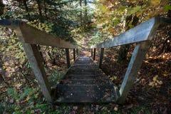 Los pasos en el bosque de la caída, Canadá Imagen de archivo