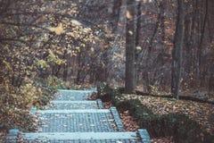 Los pasos en el parque nacional Sofiivka, Uman, Ucrania Bosque otoñal fotografía de archivo libre de regalías
