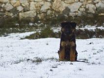 Los pastores alemanes están corriendo en el jardín en la nieve Imagen de archivo
