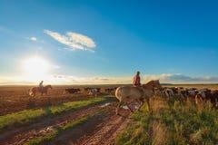 Los pastores pastan a caballo vacas fotografía de archivo libre de regalías