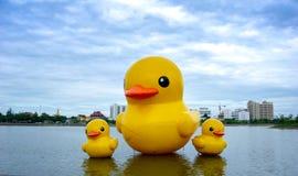 Los patos amarillos flotantes del caucho hinchan el flotador en el lago Nong Prajuk imagen de archivo