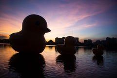Los patos de goma amarillos gigantes por la tarde imagen de archivo libre de regalías