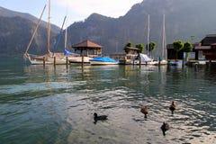 Los patos en el lago con las montañas y los barcos en el fondo en el día soleado Fotografía de archivo libre de regalías