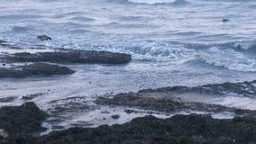 Los patos y las gaviotas de los pájaros de mar nadan en el mar Alga marina de Kamka en la playa de la arena en la puesta del sol almacen de video