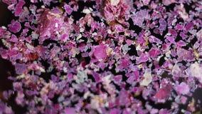 Los pedazos de pétalos púrpuras secados de la flor están fluctuando en superficie del agua oscura almacen de video