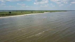 Los pelícanos jerarquizan en el lago