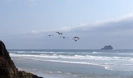 Los pelícanos vuelan a través de la línea de la playa Fotos de archivo libres de regalías
