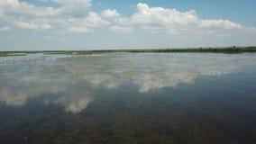 Los pel?canos jerarquizan en el lago almacen de video