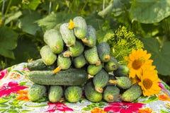 Los pepinos apilaron la pila, con las flores y los ovarios amarillos g amarillo Fotografía de archivo libre de regalías