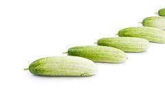 Los pepinos verdes foto de archivo