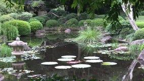Los pequeños árboles enmarcan la charca de un jardín japonés ajardinado en Australia almacen de video